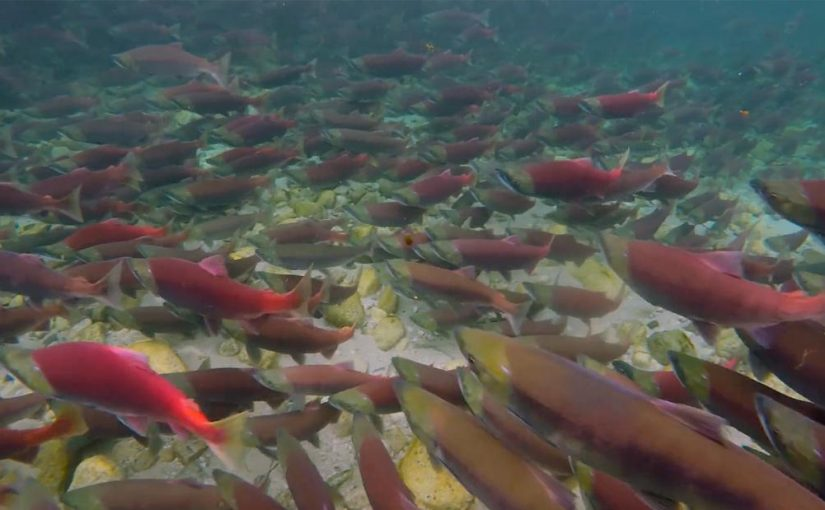 The EPA made a surprise move that could protect the world's largest salmon fishery